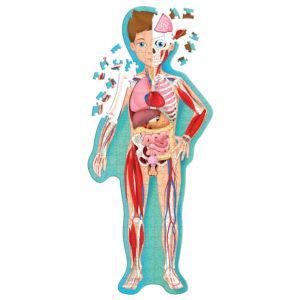 Sassi The Human Body